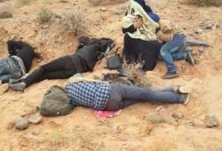 المغرب والجزائر يقتلون لاجئي سوريا بالبطيئ