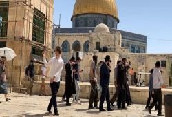313 مستوطنًا يقتحمون باحات المسجد الأقصى