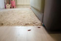 حيل ربات البيوت للوقاية من حشرات المنزل